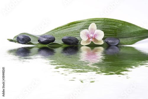 Quadro foglia verde con sassi e orchidea riflessi vendita online