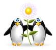 pinguini con fiore
