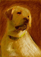 oil painting portrait of yellow labrador
