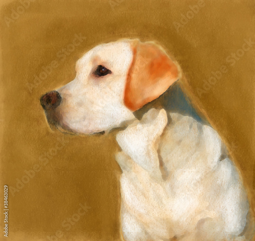 oil painting portrait of young yellow labrador - 38463029