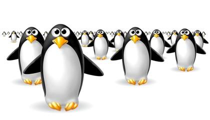 mare di pinguini