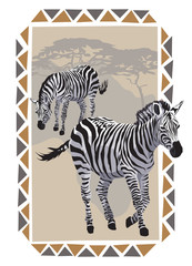 Zebras on Savannah