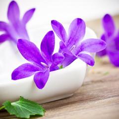 Schale mit Lila Blüten