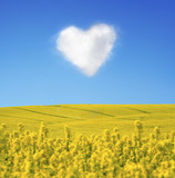 .Oilseed and a heart shaped cloud