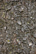 Vertical Grungy Bark Texture Background