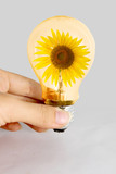 Hand hold light bulb with sunflower inside