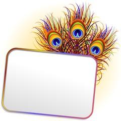 Piume Pavone Cartolina-Peacock Feathers Label Card-Vector
