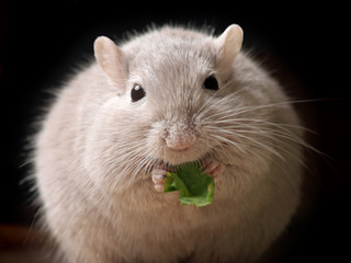 hungriger Mausball