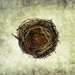 bird nest print