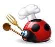 coccinella cuoco 3
