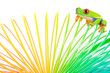 Colorful Red Eyed Tree Frog on a spring toy