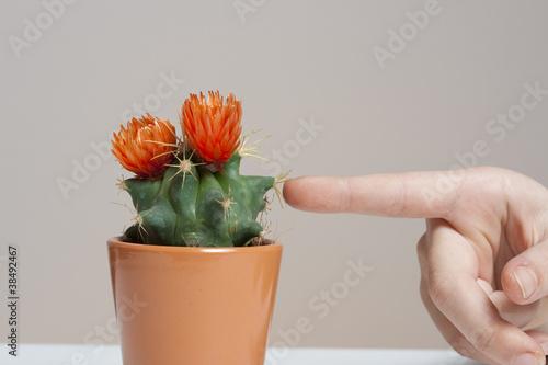 stechender Kaktus