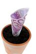 Euro-Geldschein in Blumentopf.