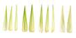 Corn leaf isolated