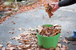 garden maintenance collecting autumn leaves