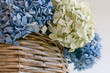 dried hydrangea in still life bouquet