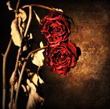 Grunge wilted roses border poster