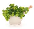 Ladies Mantle Herb Flowers