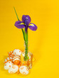 Orange easter eggs and iris on yellow backgroud