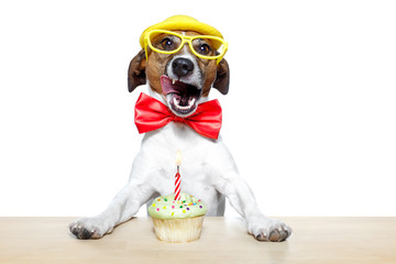 dog with birthday cupcake