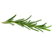 Rosmarin freigestellt - Rosemary isolated 05