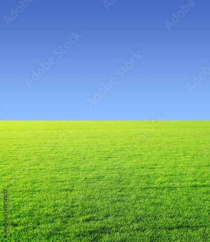 Fototapeten,natur,rasen,gras,himmel