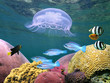 Jellyfish with corals and fish