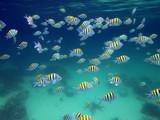 Fototapete Schule - Caribbean - Fische