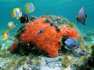 Scuba diving in the Caribbean sea