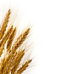 Wheat on isolated white background