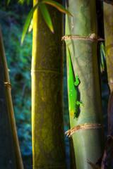 Lézard vert - Ile de La Réunion