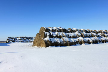 The yield of hay in the winter in the snow