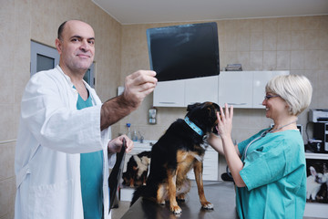 veterinarian and assistant in a small animal clinic