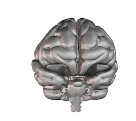 silver brain (front)