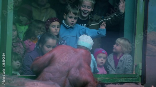 Kids watch on female orangutan with baby sit in ZOO
