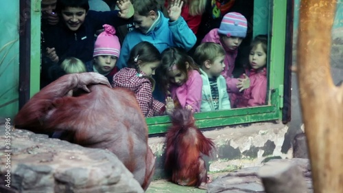 Children watch on female orangutan with baby sit in ZOO