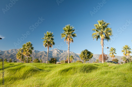 Palm Trees and Mountains