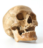 Fototapety Human skull.