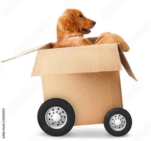 Fast shipment