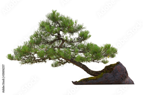 Foto op Aluminium Bonsai Mini pine bonsai tree