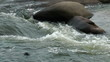 Rapids closeup