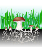 mushrooms and vegetation. Reproduction fungus Mycelium and spore