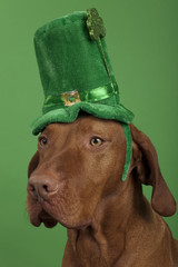 Dog with St.Patrick's Day hat