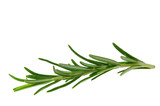 Rosmarin freigestellt - Rosemary isolated 10