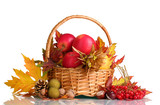 Fototapety beautiful autumn harvest in basket and leaves isolated on white