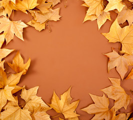 autumn fall dired leaves border fame on brown
