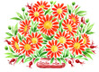 hand painted illustration: Bouquet of Red Marguerite