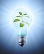 Plant inside a bulb