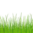 green grass - seamless vector