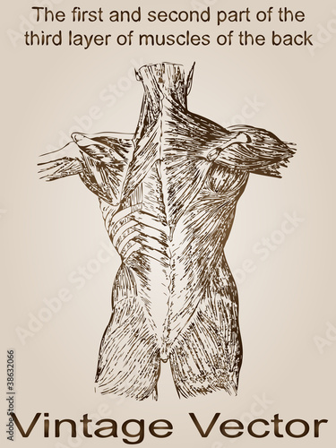 Vector vintage anatomy sketch drawing